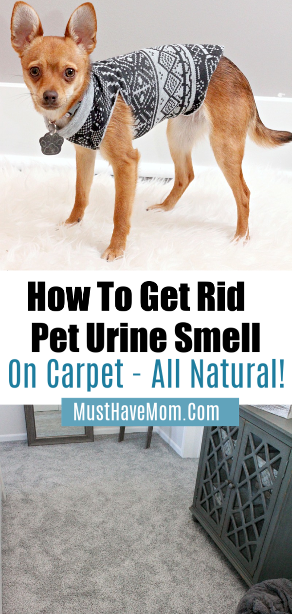 Best pet urine remover to naturally remove pee odor left behind by cats or dogs from your carpets via @musthavemom Ad