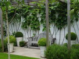 Contemporary Garden Pergola   Mini Version Of This.