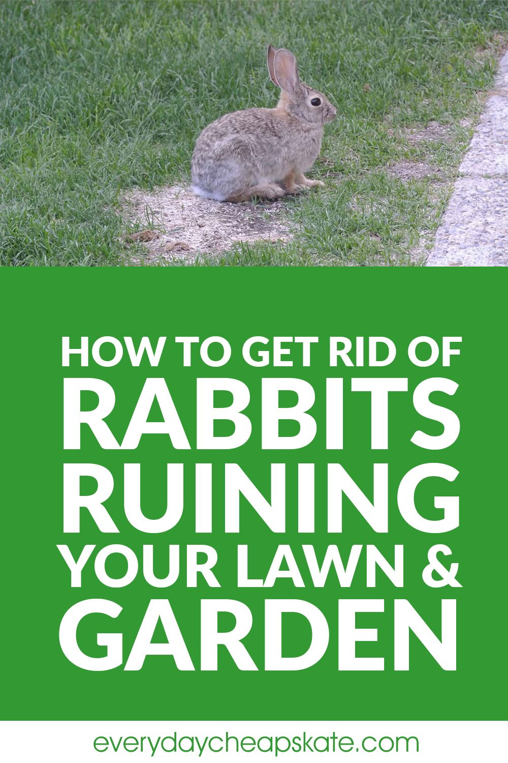 How to Get Rid of Rabbits Ruining Your Lawn and Garden in ...
