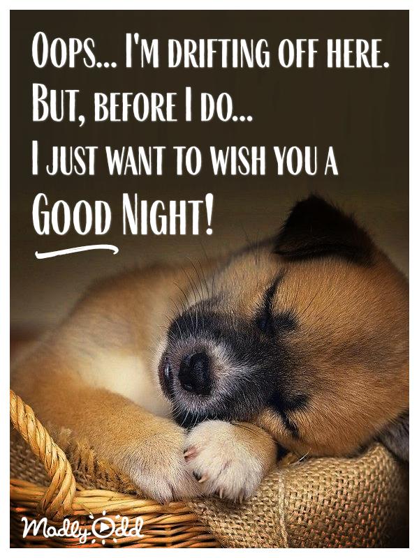 Good Night Good Night Funny Funny Good Night Quotes Cute Good Night