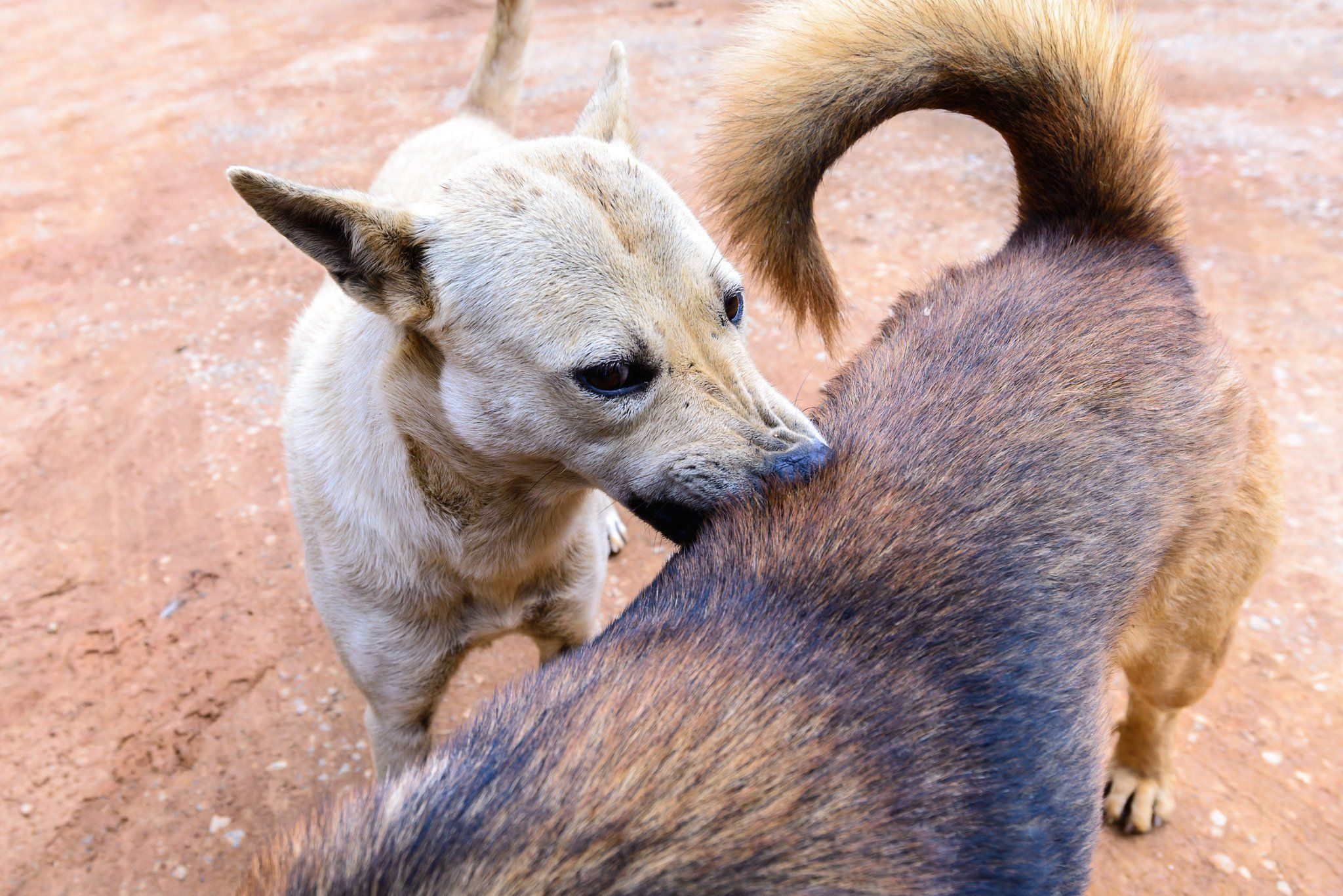 10 wild and crazy facts about fleas and dogs
