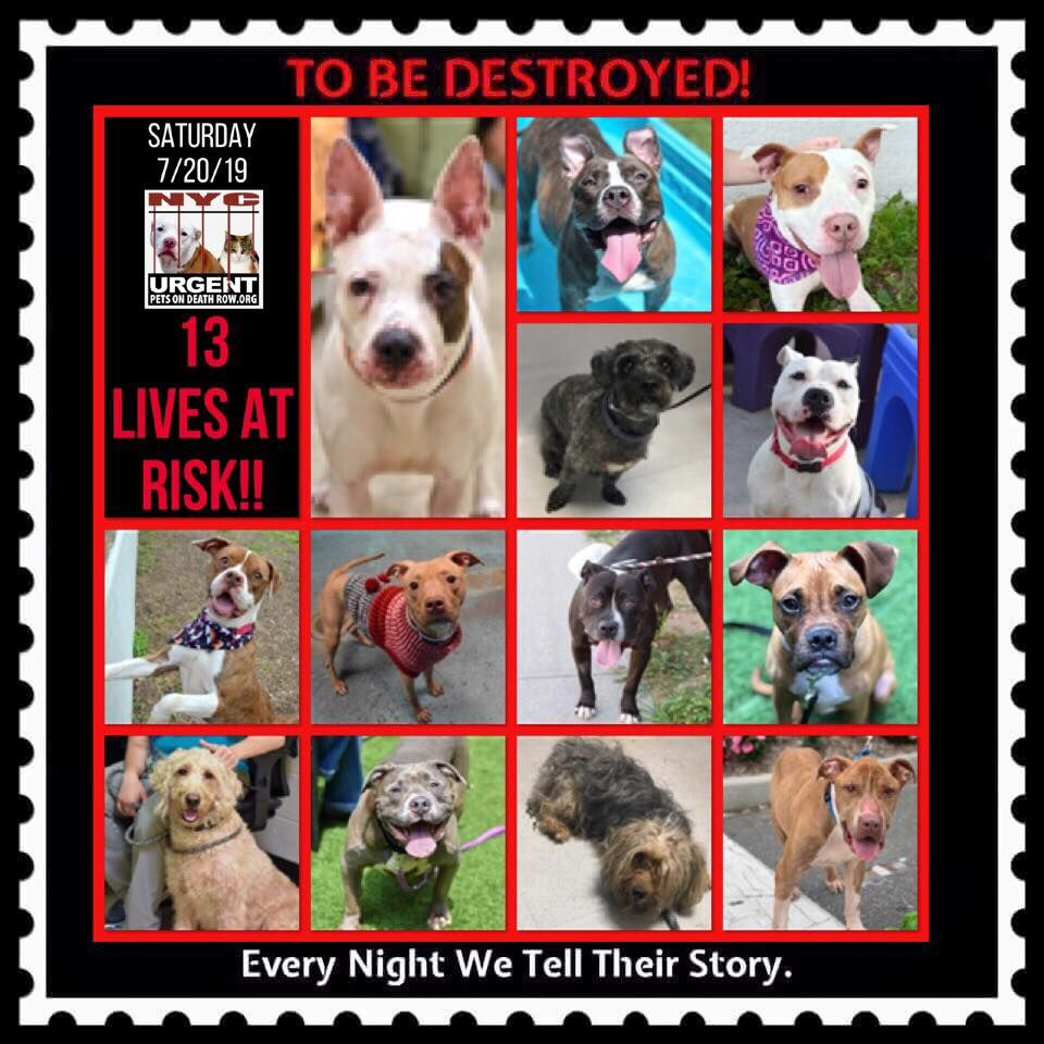Dogs To Be Destroyed 07 20 19 Dog Adoption Quotes