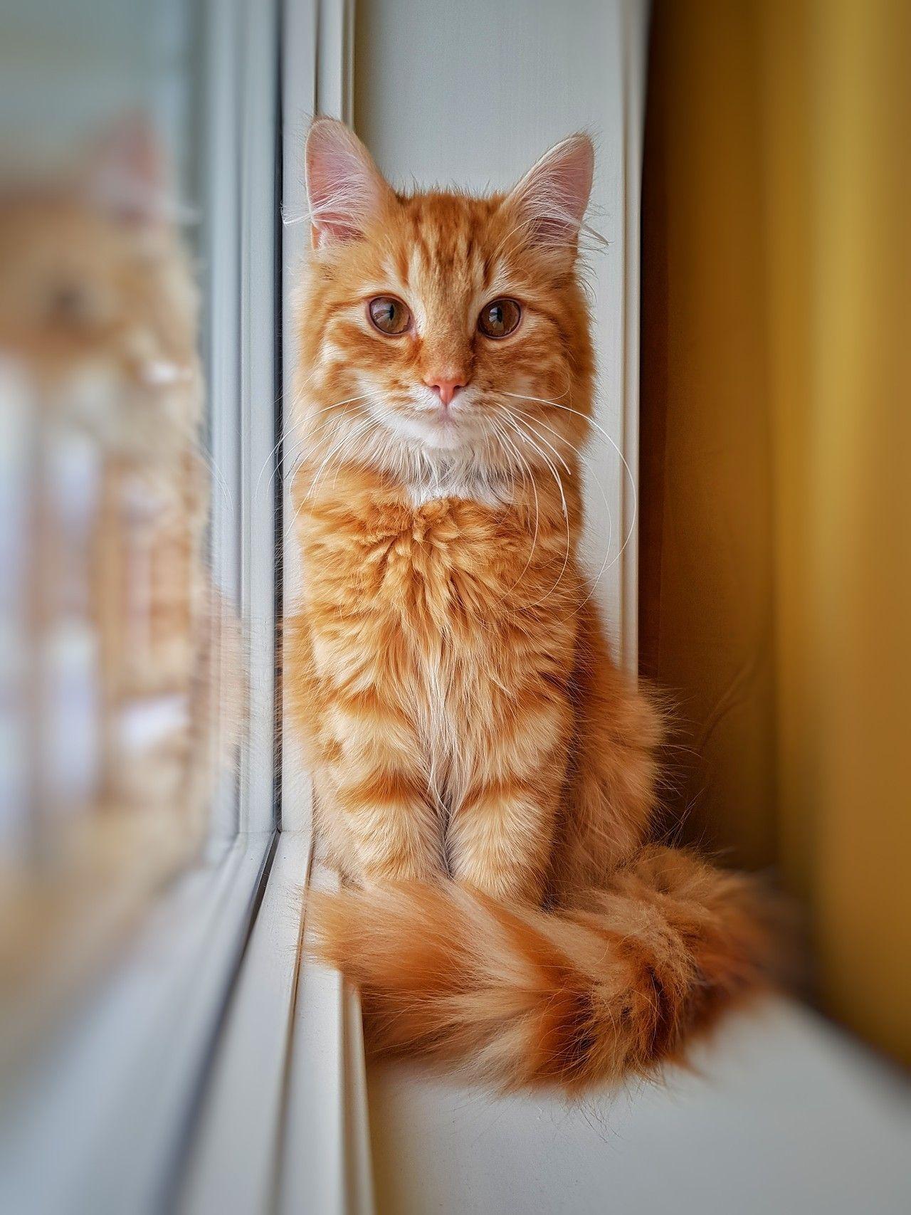 My Beatiful Baby Boy Gizmo By Andeck Cats Kitten Catsonweb Cute