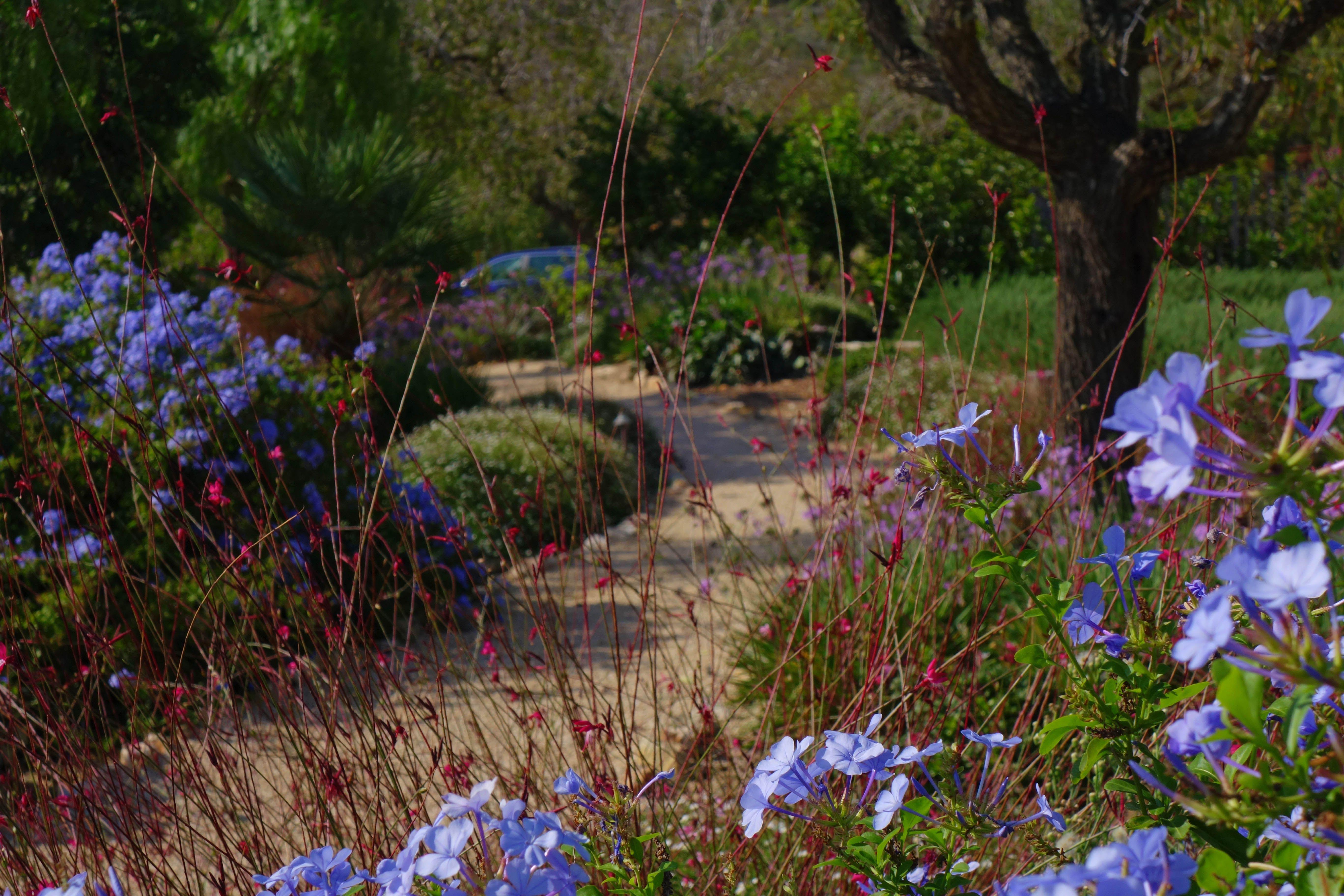 The autumn colours of this mallorcan garden path | Garden Paths ...