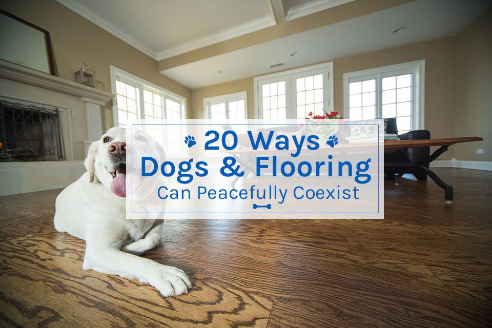 20 Ways Dogs Flooring Can Peacefully Coexist Empire Today Blog Dog Flooring Flooring Coexist