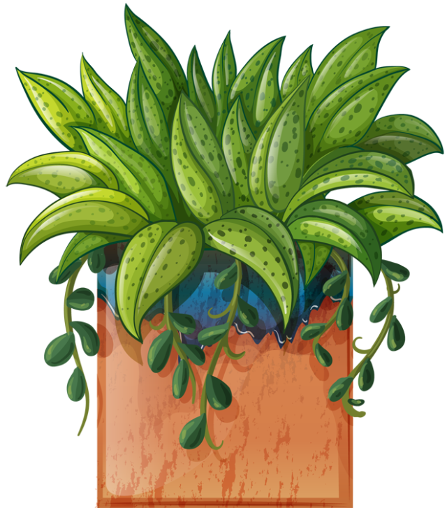Clip Art Of Beautiful Plants For The Spring Garden Plant 1