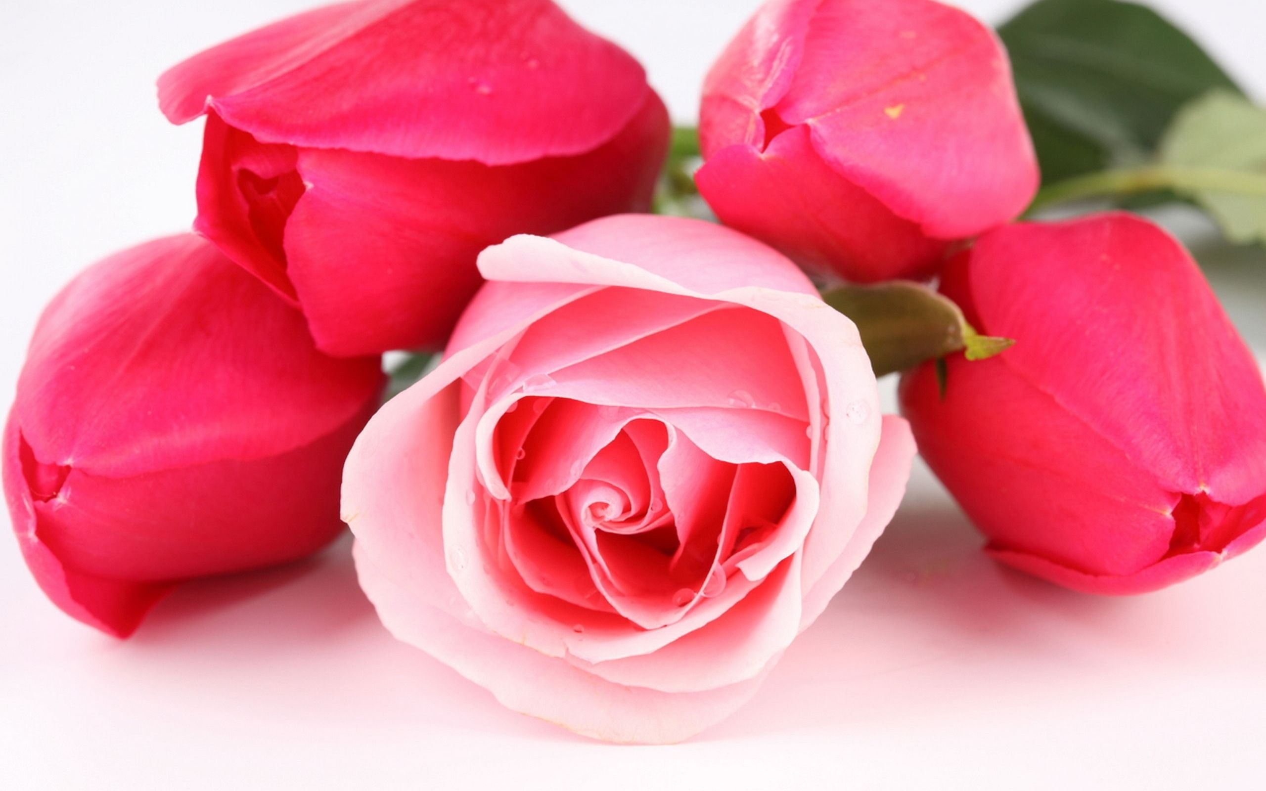 Pink Tulips and Rose Bouquet HD Photo