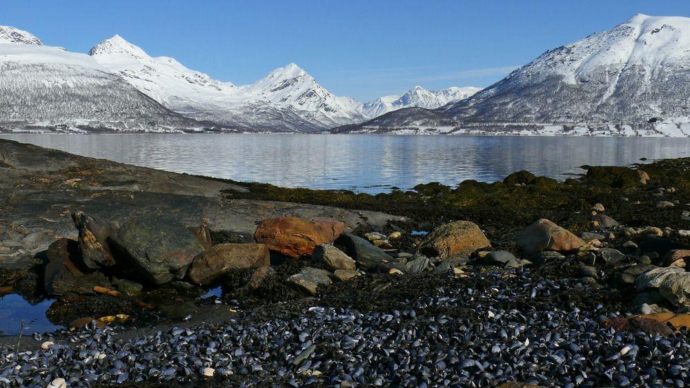 Blick über den Balsfjord zu den Lyngen-Alpen Nordnorwegen von Bernd Aberle