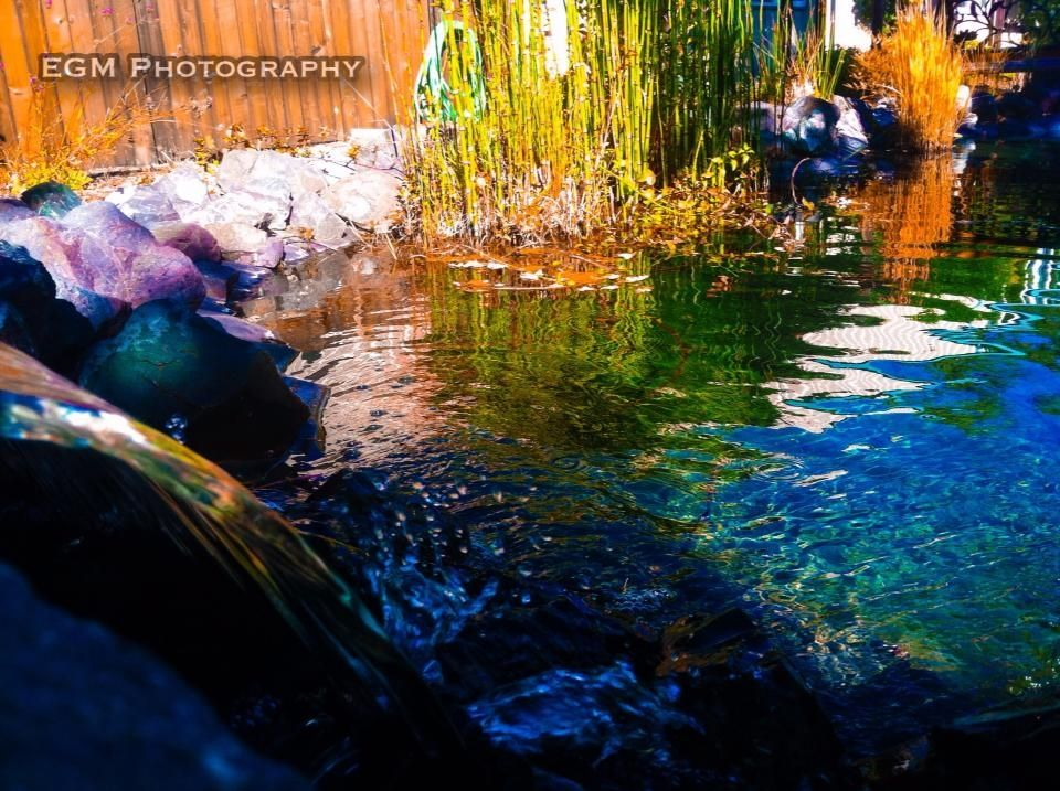 Our pond in the demonstration garden!