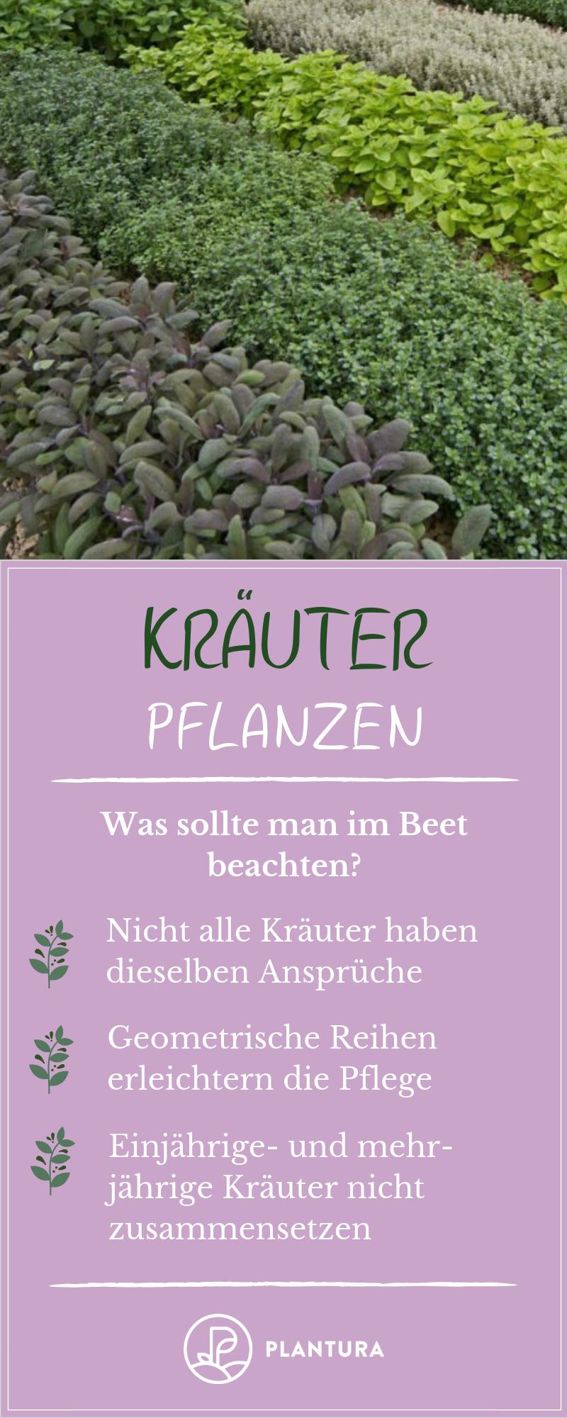 Krauter Pflanzen Tipps Fur Balkon Beet Plantura Krauter Pflanzen Krauterpflanzen Balkon Beet