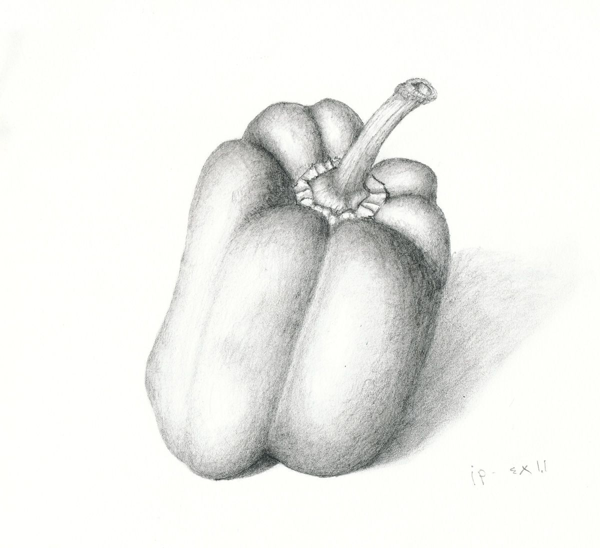 Bell Pepper Drawing
