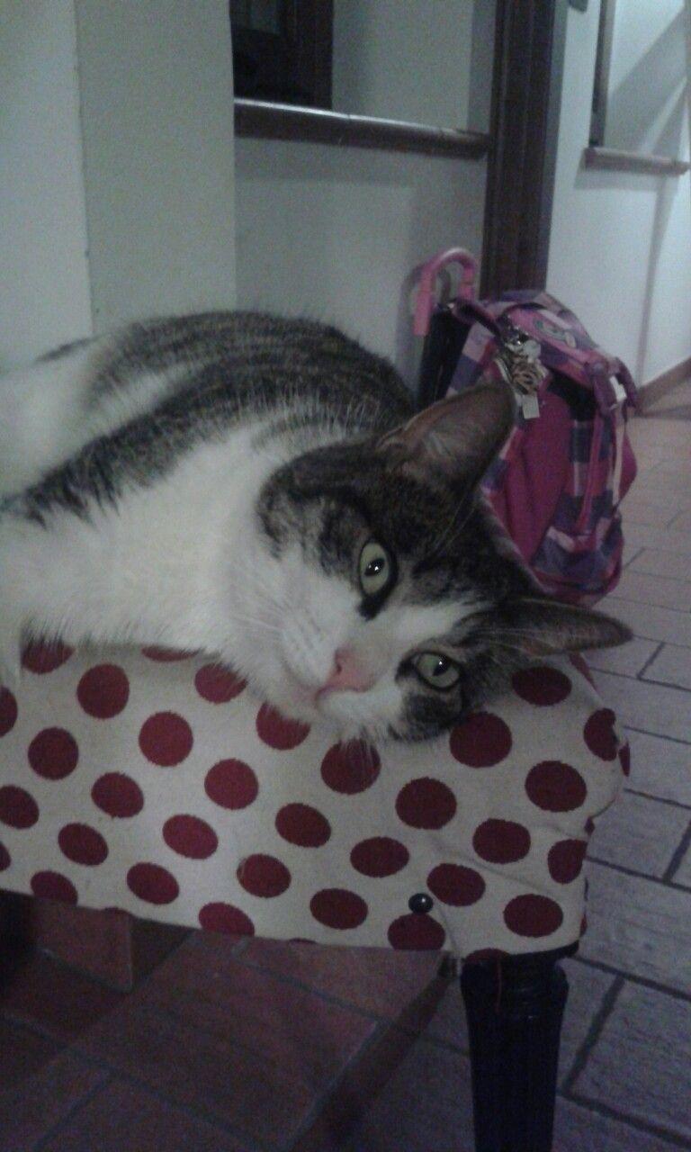 I ♥my Cat♥♡♥♡♥♡