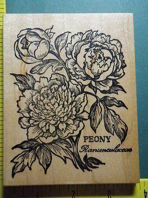 PSX-BOTANICAL-PEONY-Floral-FLOWER-RARE-UNUSED-Rubber-Stamp