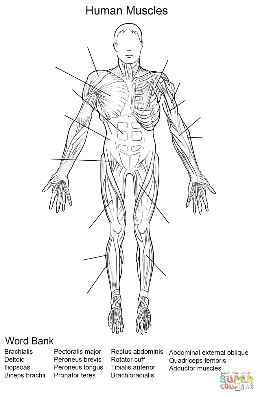Muscle Coloring Pages Easy To Color Anatomy Coloring Book Coloring Pages Words Coloring Book