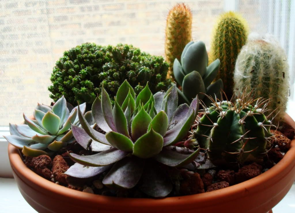 Succulent container gardens the humble nest succulents for Succulent dish garden designs
