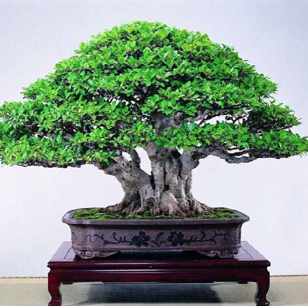 Bonsai (Photo By Instagram User: bonsaiempire)