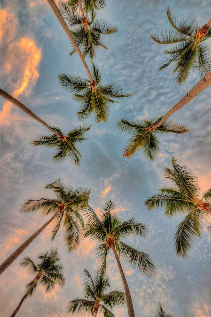 Palm Trees And Sunsets On Venice Beach Florida