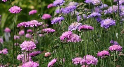 Easy to grow flowers perennials flowers and gardens easy to grow flowers low maintenance perennials mightylinksfo