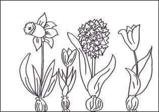 fruehblueher | ausmalbilder, malvorlagen und ausmalen