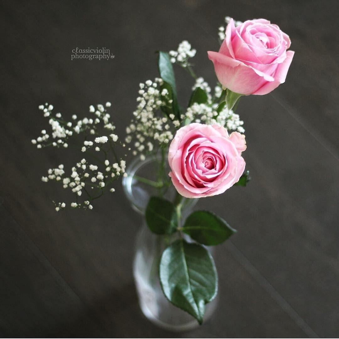 فز قلبي بنبضه والغلا به يزيد للوطن كل حبي وردتين وسلام ㅤ ㅤ By Classicviolin ㅤ Chosen By Rawasi ㅤ التقييم مـن 5 ㅤㅤㅤㅤ تـاقـزات لنشر Flowers Photo Decor