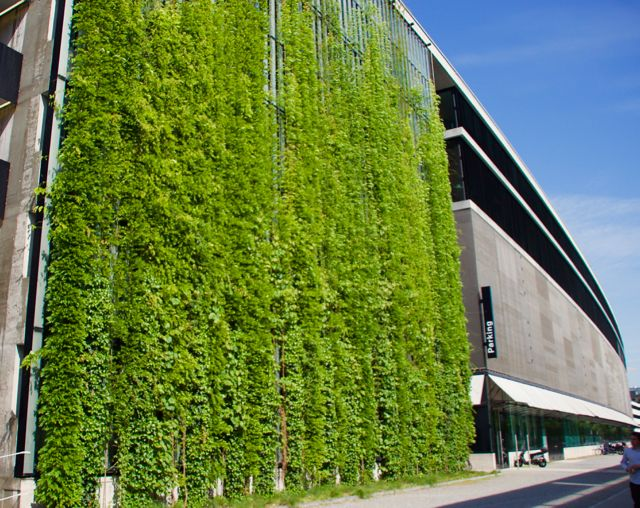 A cable supported green wall facade in switzerland for Green wall system