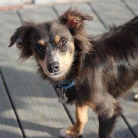 Best Friends In Atlanta Kitten Adoption Dog Adoption Dogs