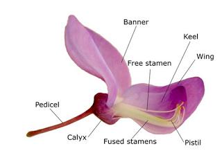 Mengenal Struktur Bunga Sempurna Dan Bagian Bagiannya Bunga Teratai Bunga Gambar