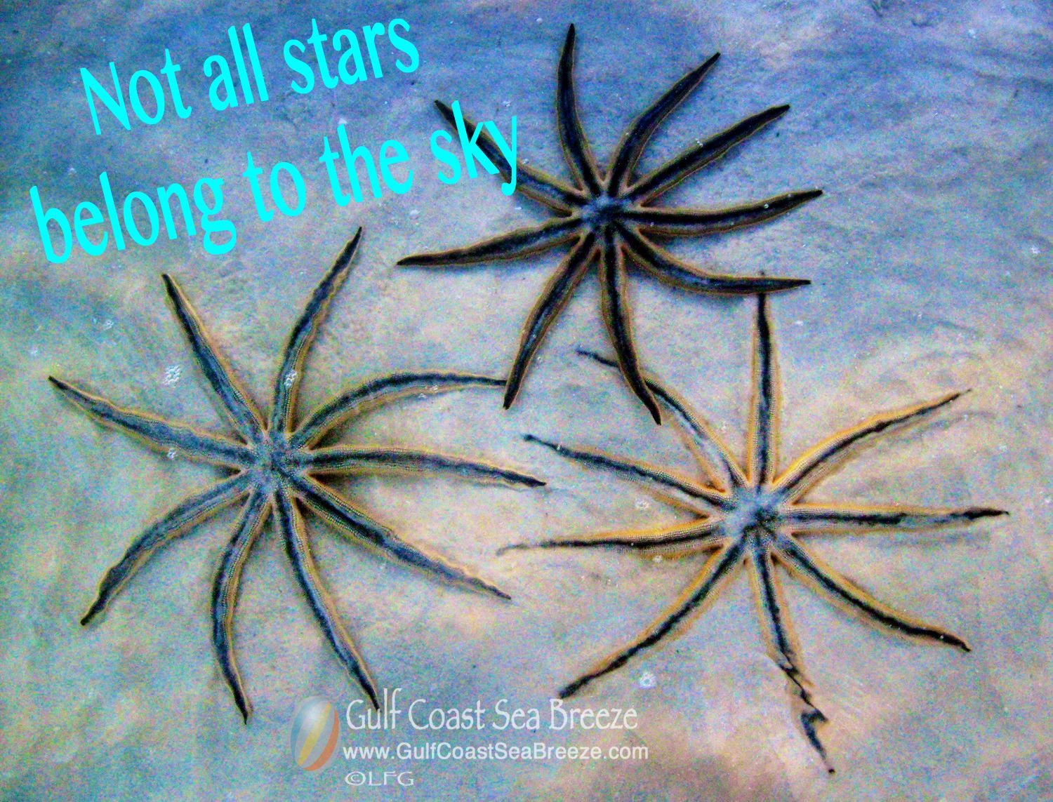 Not all stars belong to the sky!
