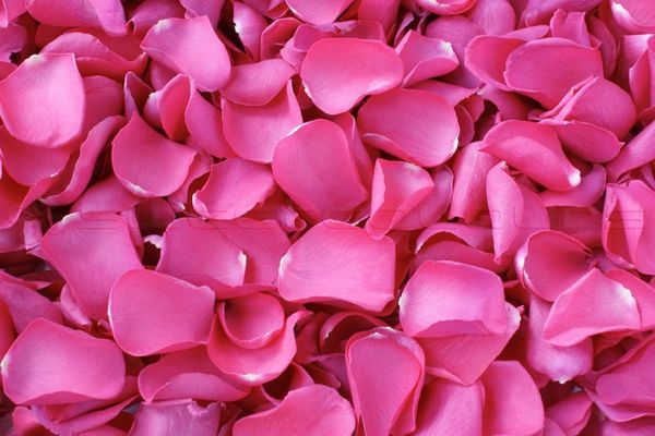 Freeze dried rose petals hot pink flower girl basket pinterest freeze dried rose petals hot pink flower girl basket pinterest dried rose petals rose petals and rose petal confetti mightylinksfo