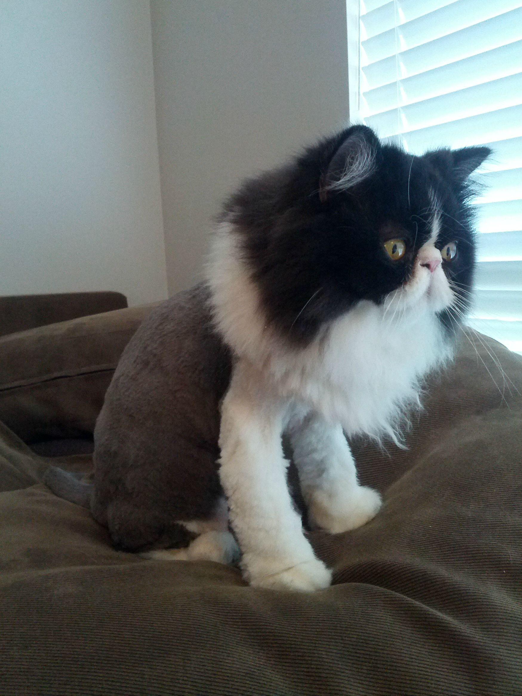 finally got princess toadstool her first summer haircut