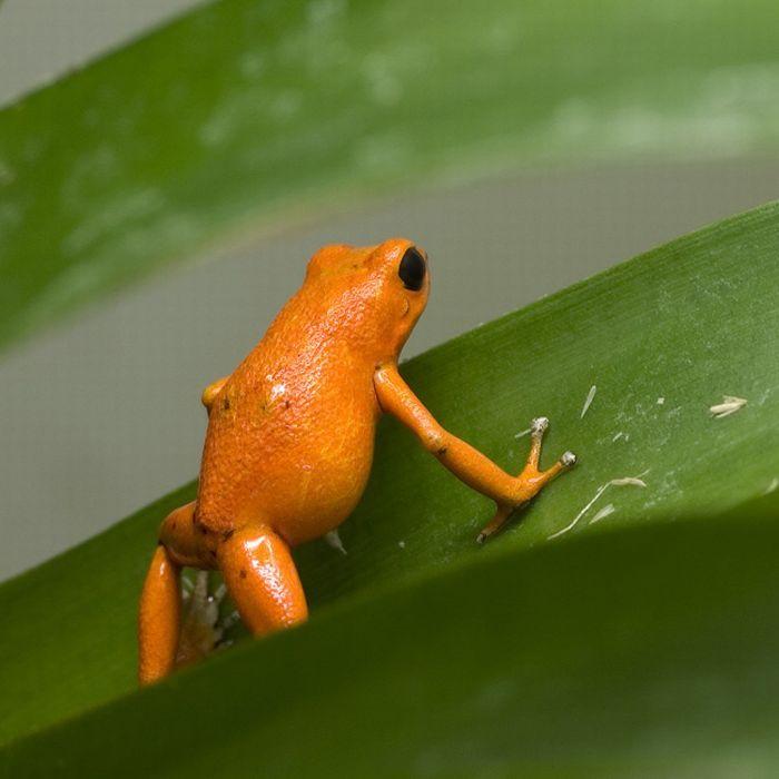 Google Image Result For Http Acidcow Com Pics 20100623 Orange Color Animals 15 Jpg Orange Color Shades Of Orange Animals