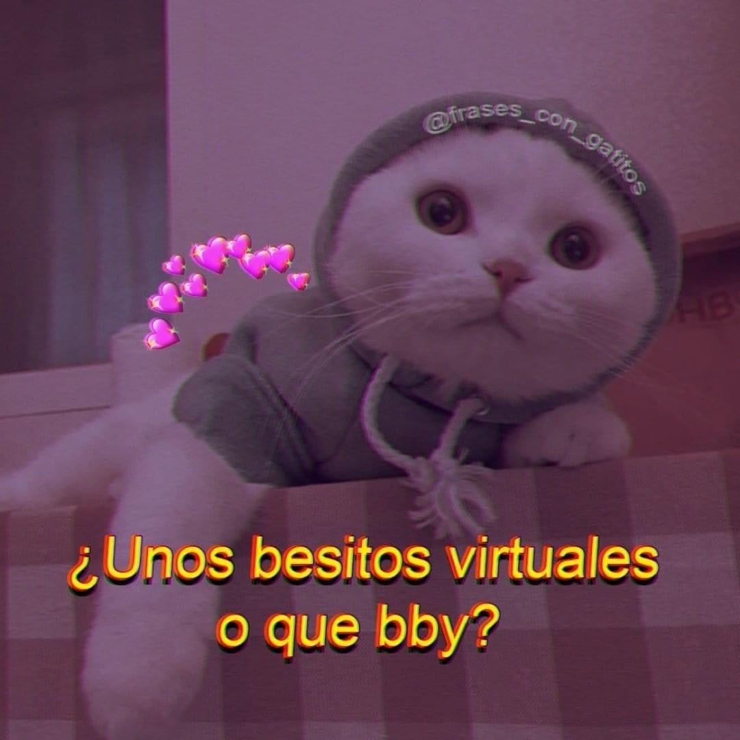 Pos Si En 2020 Memes Divertidos Memes Romanticos Meme Gato