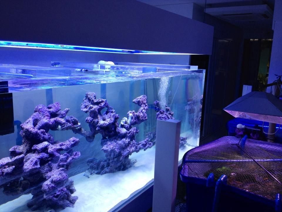 Reef Scaping Ideas Originally Posted By Chingchai Saltwater
