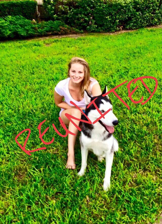 Reunited Lostdog 4 12 15 Jacksonville Fl Siberianhusky M