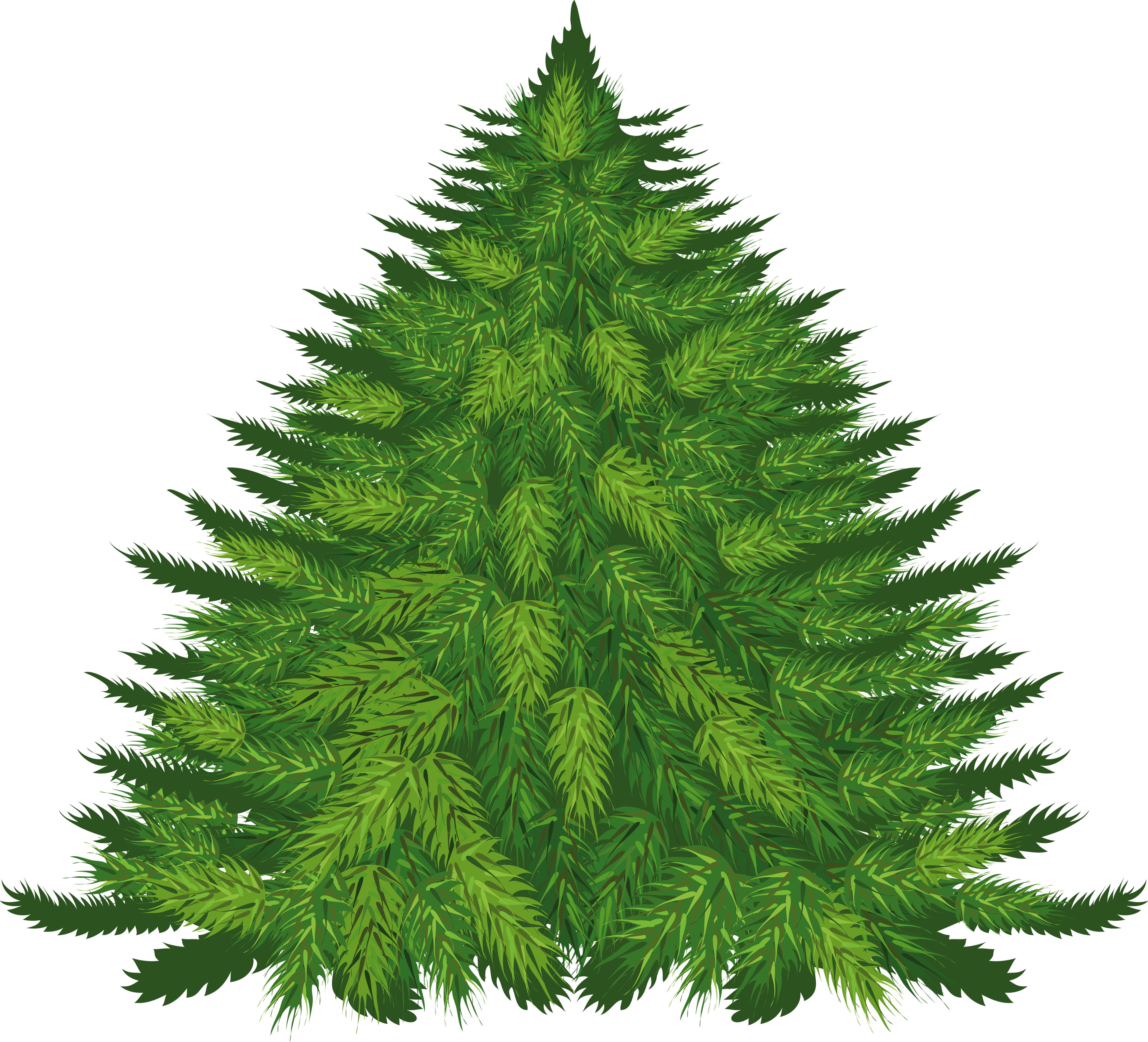 Fir Tree Png Image Fir Tree Tree Conifer Trees