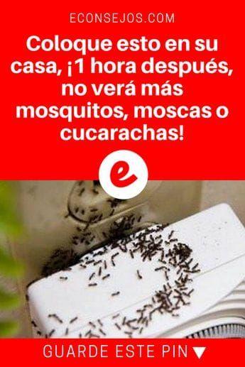 Coloque esto en su casa 1 hora despu s no ver m s - Eliminar insectos en casa ...