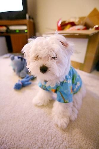 Cute Dogs And Puppies 2019 Select Breed And Get Latest Images
