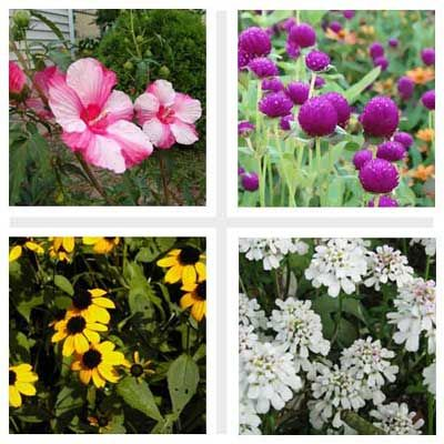 Die besten 25+ Blühende pflanzen Ideen auf Pinterest | Blühende pflanzen, Mehrjährige pflanze ...