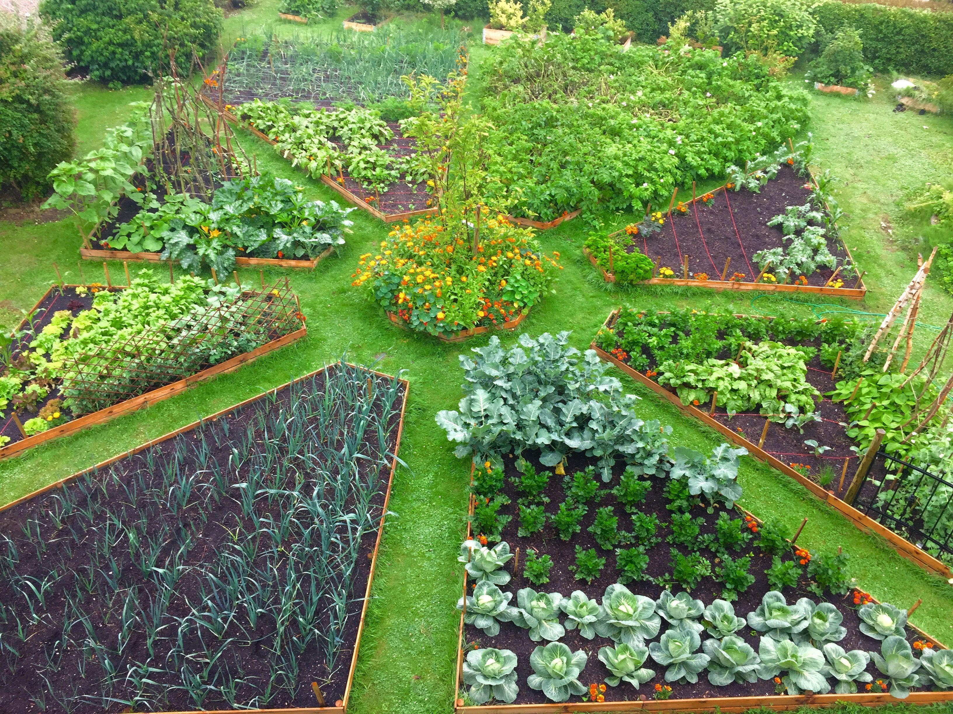 Pin Oleh Jray Di Vegetable Raised Bed Gardens Ide Berkebun Kebun Perkebunan Sayur
