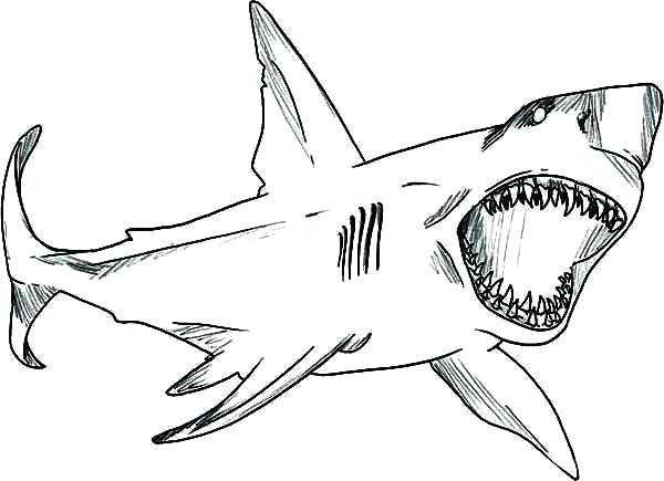 Resultat De Recherche D Images Pour Requin Dessin Coloriage