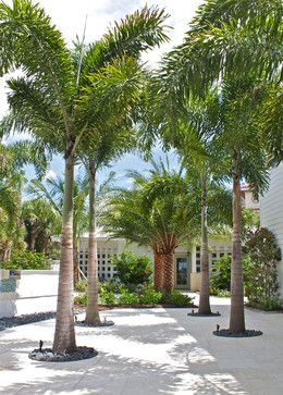 Queen Palms For Pool Casey Key Beachfront Home Tropical Landscape Tampa Artistree Landscape Palm Trees Landscaping Queen Palm Tree Tropical Landscaping