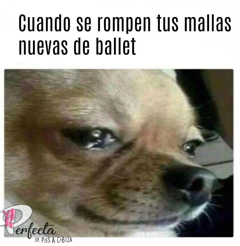 Mallas De Ballet Memes Divertidos Memes Memes De Perros Chistosos