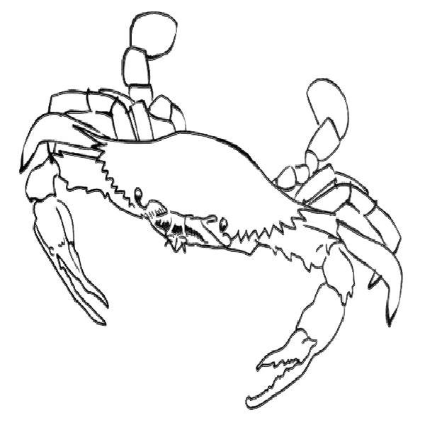 Blue Crab Colouring Pages Beach Coloring Pages Coloring Pages Coloring Pages For Kids