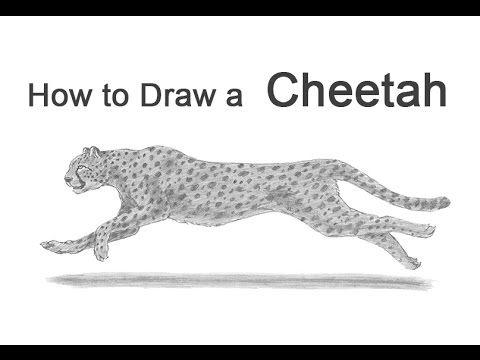 Dit Is Mijn Video Ik Heb Een Cheetah Gekozen Omdat Ik Het Een Mooi Dier Vind Door Zijn Snelheid Daarom Laat Ik Hem Ook Rennen Cheetah Dieren Luipaardprint