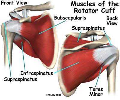 1000 images about rotator cuff on pinterest shoulder surgery  : rotator cuff diagram - findchart.co