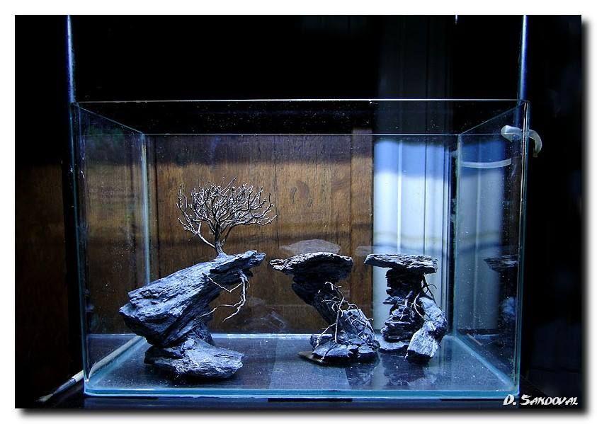 17 images about aquarium ideas on pinterest cichlids home aquarium and custom aquariums