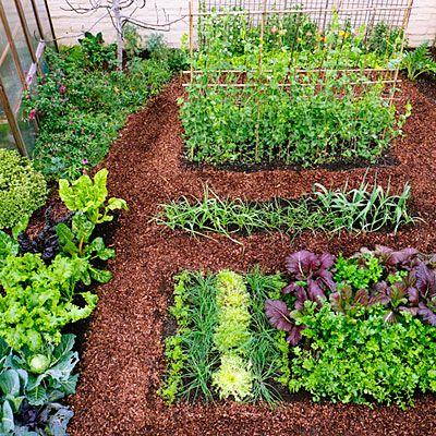 Attractive Plant A Cool Season Vegetable Garden