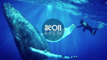 A free diver meditates on the beauty of the ocean – Still – Aeon Film