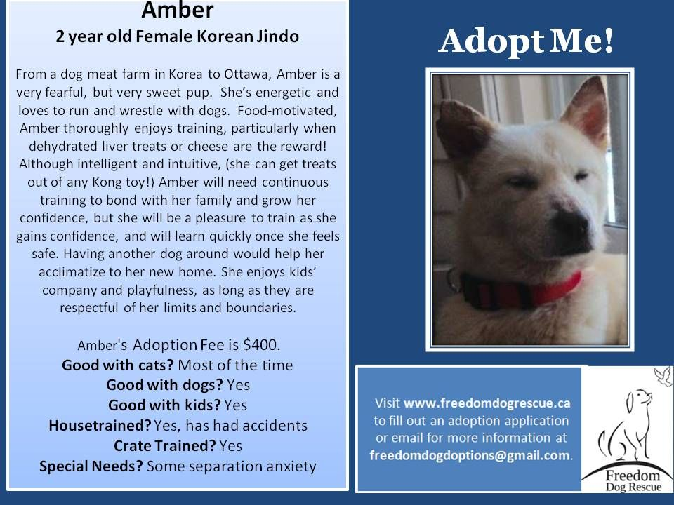 Available for adoption adoption dogs rescue dogs