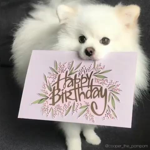 �Surprise Surprise�